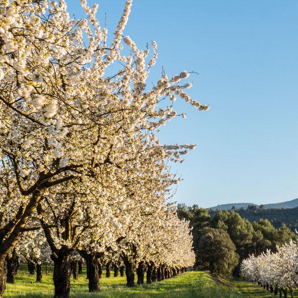 Rideau à mouche imprimé Cerisiers par mon-rideau-a-mouche.com