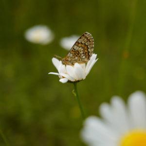 Rideau à mouche imprimé Papillon par mon-rideau-a-mouche.com