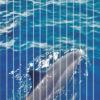 visuel-dauphins